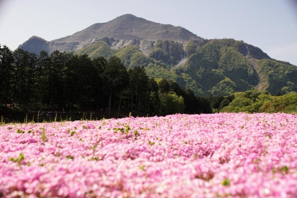 羊山公園 武甲山