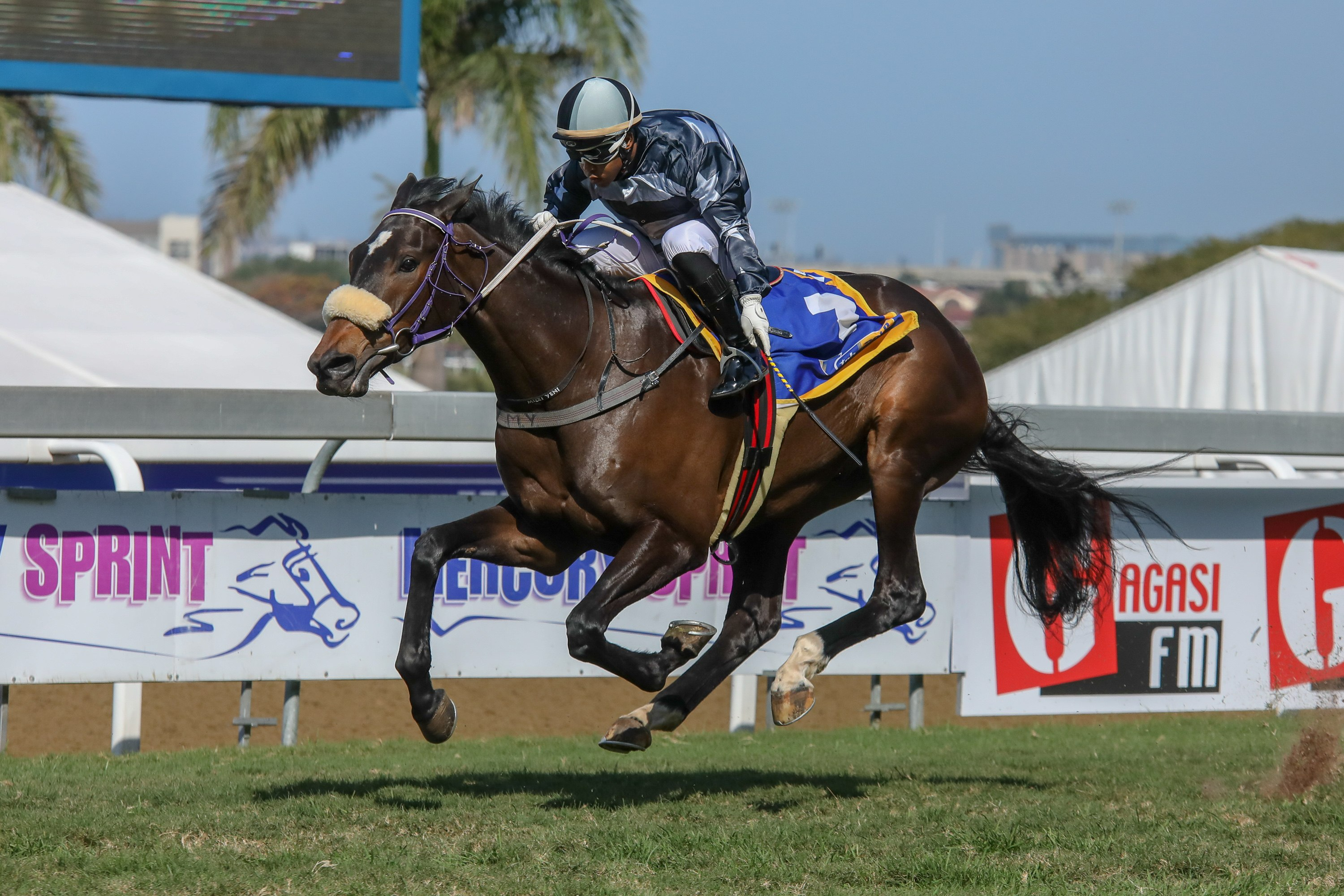 Kzn Results From Gold Cup Day Kznbreeders