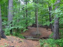 La forêt carolinienne.JPG