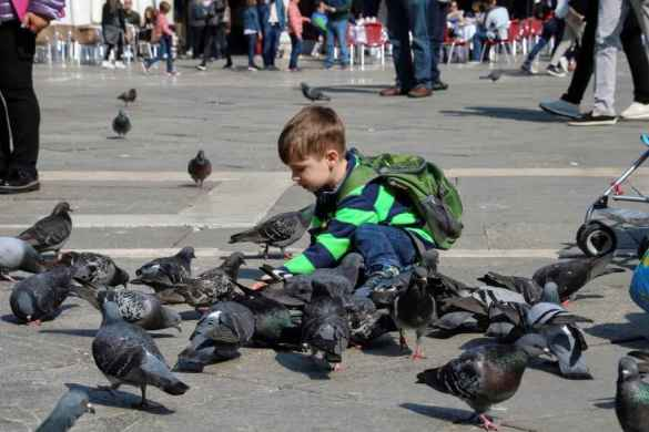 Les pigeons de la place St-Marc.