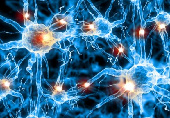 Neurones en 3D (Capture d'écran — Studio 3D — http://bit.ly/2qSZh6m)