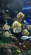 Un ban de poissons