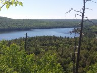 Vue sur la forêt