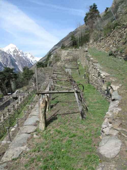 Vignes en Italie (Val d'Aosta)