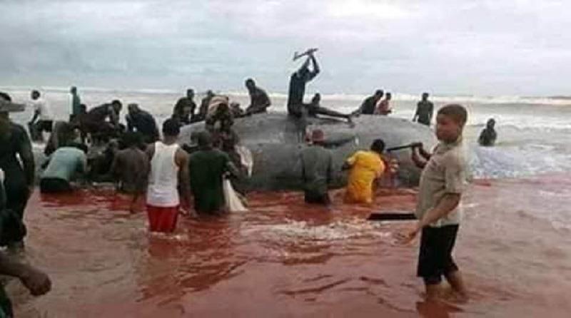 [Photo] Une baleine a eu le malheur d'échouer sur une plage africaine