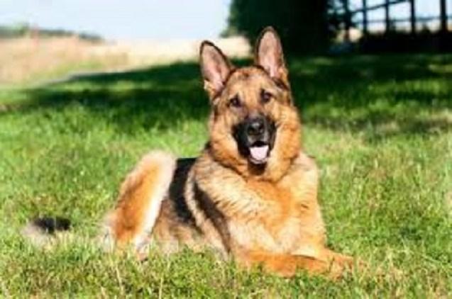 Un chien taxé de raciste pour avoir uriné dans un jardin