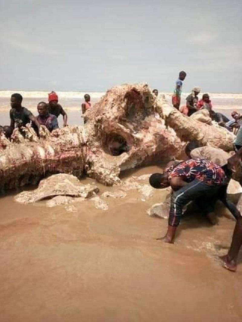 [Photo] Voici le reste de la baleine, 4 jours après son arrivée sur la plage