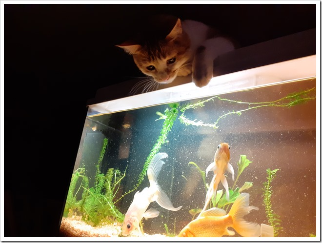 chat poissons