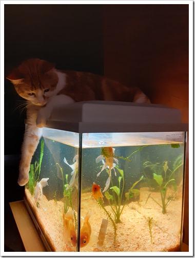 chat aquarium