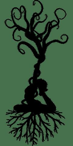 ancrage-énergetique-arbre-racine-souplesse