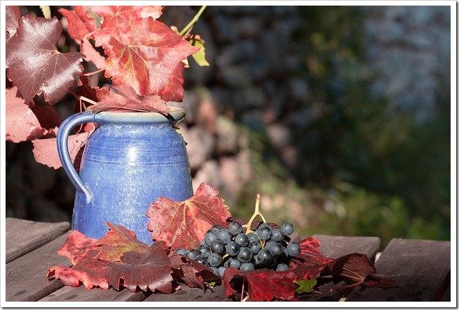 aperitif preferes vendanges raisins ratafia