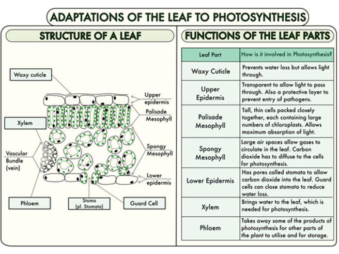 flower transpiration diagram ingersoll rand air compressor wiring gcse plant biology worksheet bundle by beckystoke - teaching resources tes