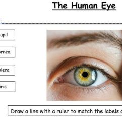 Human Eye Diagram Label Worksheet Wiring Fluorescent Lights In Parallel Ks2 And 3 The Skeleton Ear Tooth 4 Worksheets By Newromantic Teaching Resources Tes