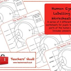 Human Eye Diagram Label Worksheet 5 Pin Relay Wiring Labelling Worksheets By Helenrachelcrossley Teaching