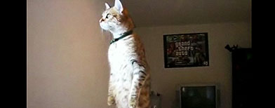 Cat (Yahoo! Video)