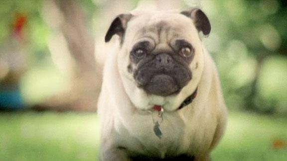 Doritos: Pug Attack @ Yahoo! Video