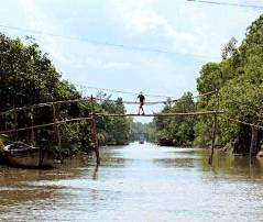 Monkey Bridges in Vietnam's Mekong Delta