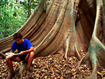 A scientist sitting on a buttress root in the rainforest in the Lockhart River Aboriginal Community, Queensland, Australia (Getty)