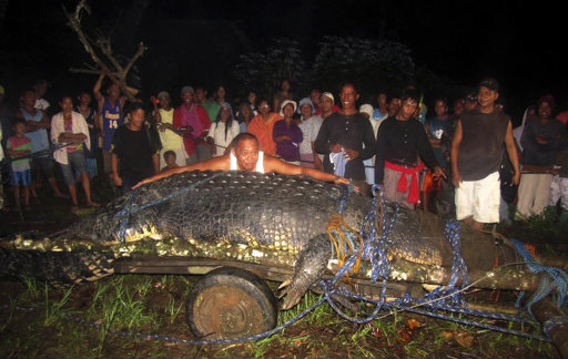In this photo taken Sunday, Sept. 4, 2011, Mayor Cox Elorde of Bunawan township, Agusan del Sur Province, pretends to measure a huge crocodile which was captured by residents and crocodile farm staff along a creek in Bunawan late Saturday in southern Philippines. Elorde said Monday that dozens of villagers and experts ensnared the 21-foot (6.4-meter) male crocodile along a creek in his township after a three-week hunt. It was one of the largest crocodiles to be captured alive in the Philippines in recent years. (AP Photo)