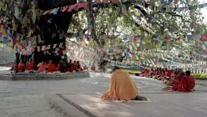 Monks chant under the Bodhi tree, adjacent to the Maya …