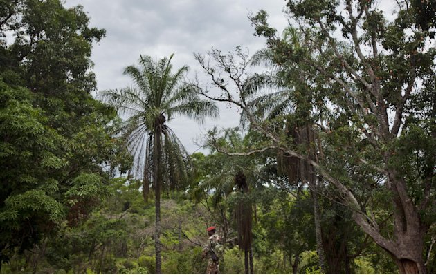 A soldier from the Central African Republic looks out over the dense forest as he stands guard at a building used for joint meetings between them and U.S. Army special forces, in Obo, Central African
