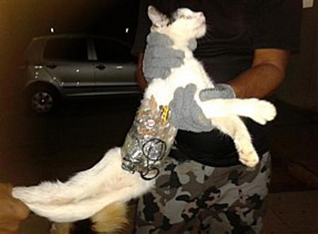A prison guard holds a cat that has objects wrapped around his body with tape at a prison in Arapiraca