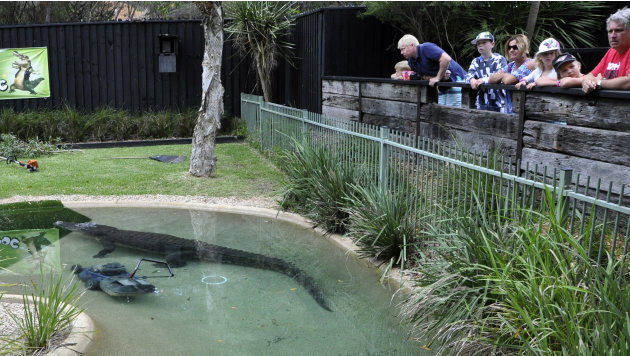 Visitors watch as Elvis, a giant saltwater crocodile swims next to a lawnmower in his pool at the Australian Reptile Park at Gosford, Australia, Wednesday, Dec. 28, 2011. The 16-foot (5-meter), 1,100-