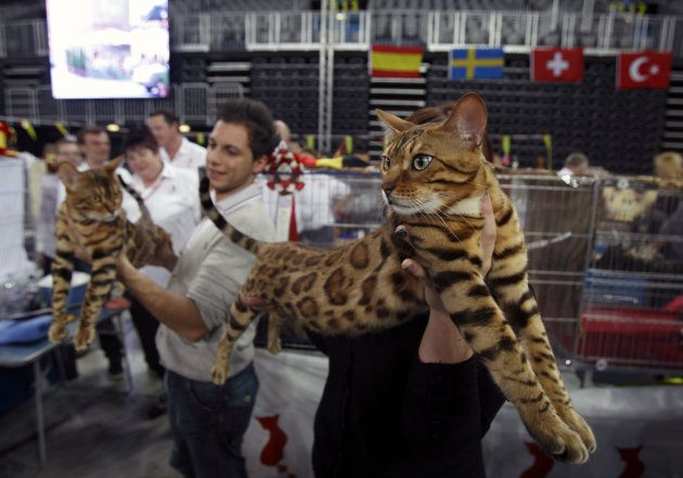 A participant carries his Bengal during the World Cat Show in Zagreb
