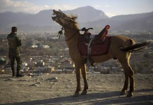 A horse neighs next to an Afghan soldier observing …
