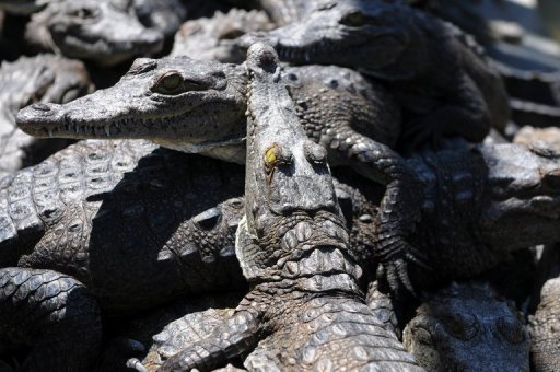 Five dead crocodiles, 14 critically endangered turtles and a cache of other rare species have been found in the home of a suspected wildlife trader in one of the Philippines' biggest slums, the government said Friday