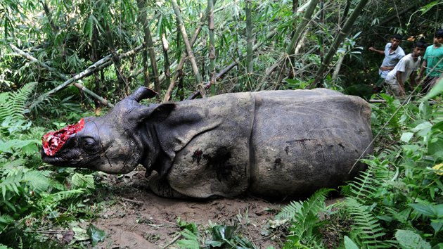 Shocking Photos: Poachers chop Rhinos' horns