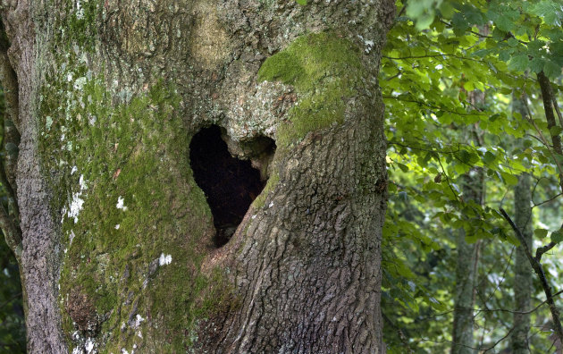 Love Hearts In Nature