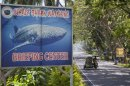 A sign advertising whale shark watching is pictured as a tricycle passes by in the village of Tan-awan