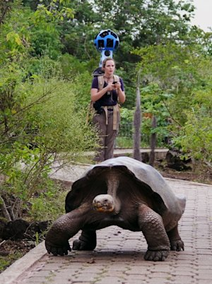 In this May 2013 photo provided by Google, a giant tortoise crawls along the path near Googler Karin Tuxen­Bettman while she collects imagery with the Street View Trekker in Galapaguera, a tortoise breeding center, which is managed by the Galapagos National Park Service, in Ecuador. Few have laid eyes on many of the volcanic islands of the Galapagos archipelago that remain closed to tourists. But soon the curious will be able to explore these places that inspired Charles Darwin's theory of evolution from their computers or mobile devices. Google Maps sent crews armed with backpack-mounted Street View cameras and underwater gear to the Galapagos, and will be bringing the islands' natural wonders to the Internet. (AP Photo/Google)