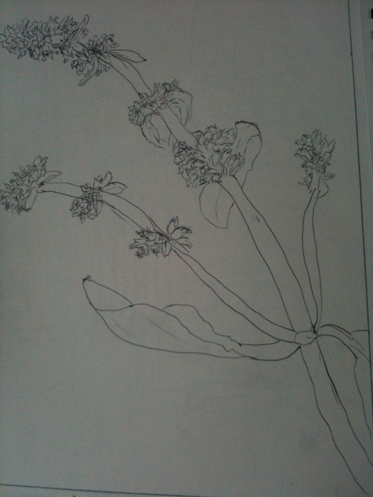 My first drawings (3/3)