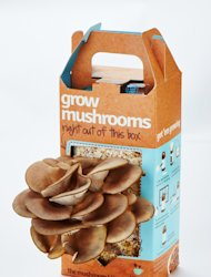 This undated publicity product photo provided by Back to the Roots shows a mushroom kit with a flush of organic gourmet oyster mushrooms at Day 10 of growth. (AP Photo/Back to the Roots, Chris Roche)