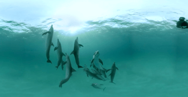 Dolphin Project Virtual Reality RYOT