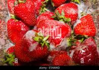 Mouldy Fruit Stock Photos & Mouldy Fruit Stock Images - Alamy