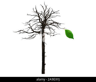 one last leaf on bare tree branches Stock Photo: 5486014