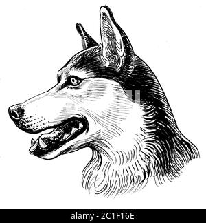 Husky dog head, Ink black and white illustration Stock