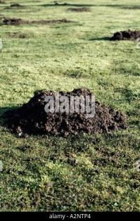 Mole hill molehills tunnel ,damage, moles , garden pest ...