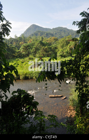 Protected rainforest area on the Kelani River near