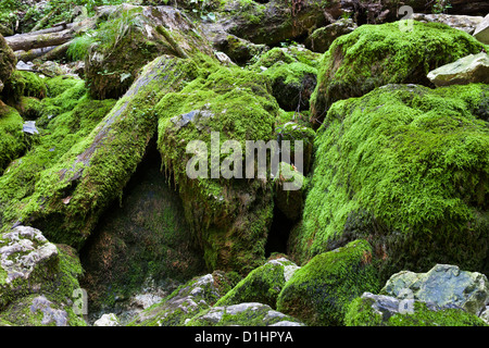 lichen and moss rock boulders