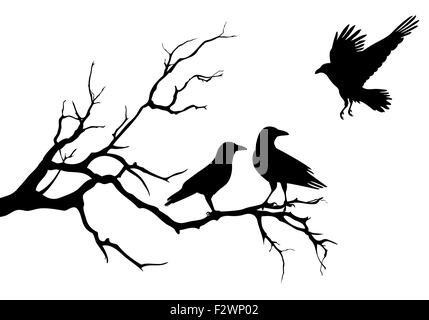 Crow Raven Black Bird flying away from electric cable line