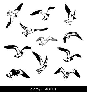 Seagulls vector silhouette set drawing by hand Stock