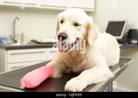 Dog Recovering After Treatment On Table In Veterinary ...