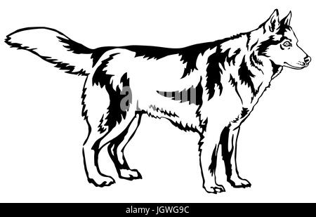 Siberian husky. Vector illustration Stock Vector Art