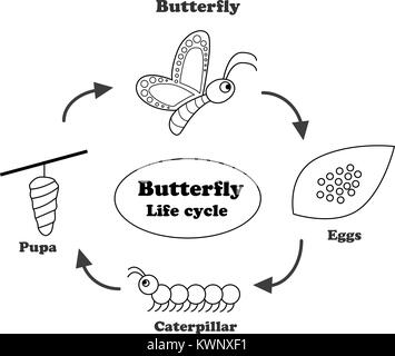 Life cycle of monarch butterfly illustration Stock Vector