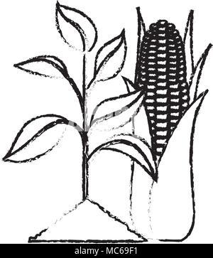 Biofuel Life Cycle, Biomass Ethanol From Corn, Sugarcane