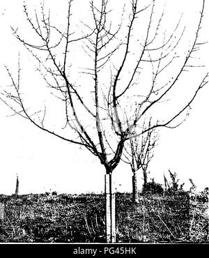 Tree with part of the root system exposed in Rouge